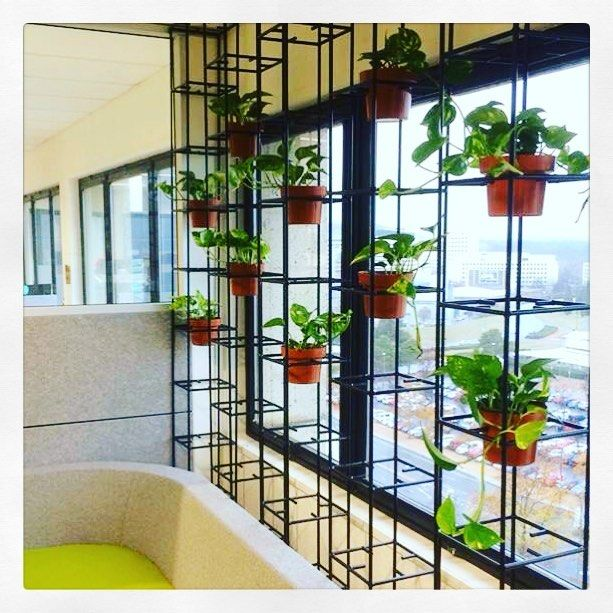 Our indoor plant team have constructed and installed this stunning Schiavello Vertical Wall of Devils Ivy in a high rise building office in Canberra.  The team will maintain and care for it as part of the package.