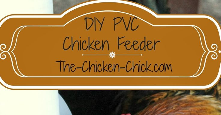 Wasted chicken feed drives me nuts and I was determined to build a feeder that would put an end to chickens billing feed out onto the gr...