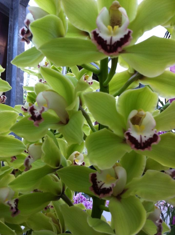 8 Best Images About Purple And Green Cut Orchids On