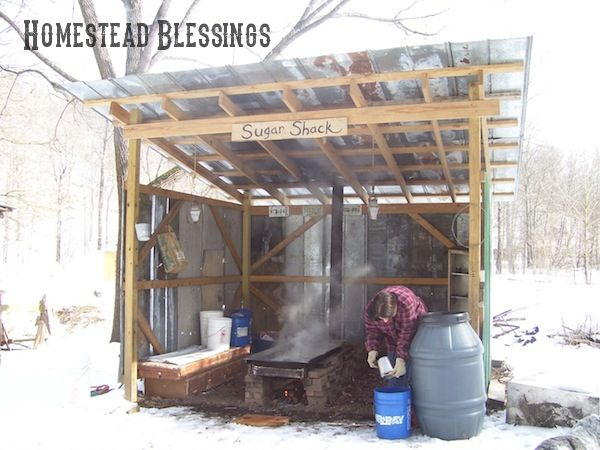 Sugar snow is a great time for tapping trees and cooking down maple sap into syrup! This shack made a wonderful shelter!!! Homestead-Blessings