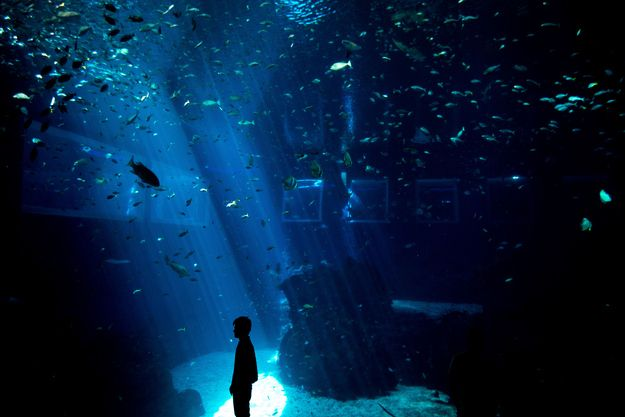 World's largest aquarium in Singapore. This place looks magical