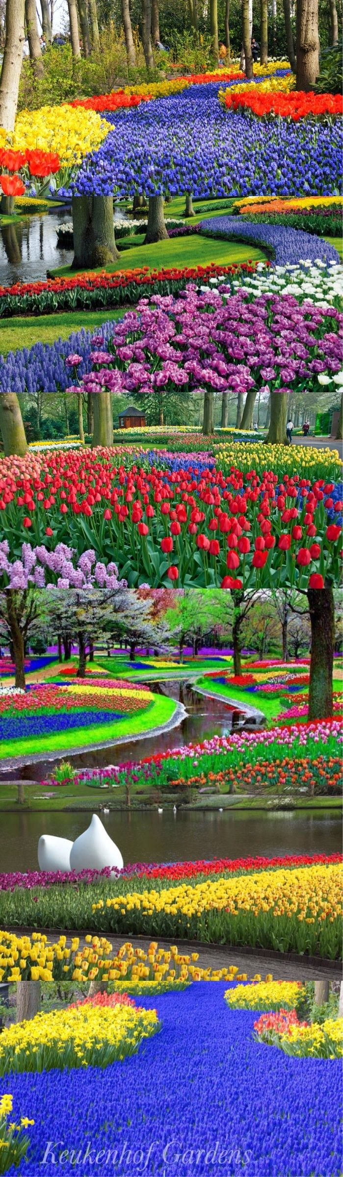 The Keukenhof features a variety of different gardens and garden styles. For example, the English landscape garden features winding paths and unexpected see-through points.  The historical garden is an enclosed garden where you can see many old types of bulbs.