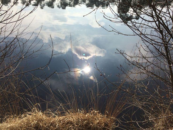 Zon in het Van Esscheven 22 maart