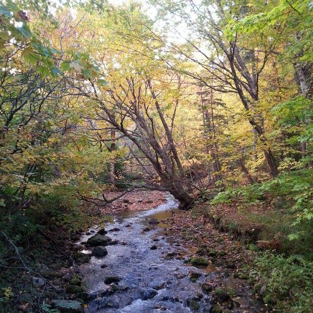 Margaree Stream