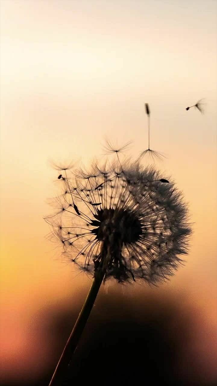 Pin Oleh Yureza Di Yippi Fotografi Alam Ilustrasi Alam Pemandangan