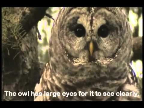 ▶ Owl video for kids - YouTube