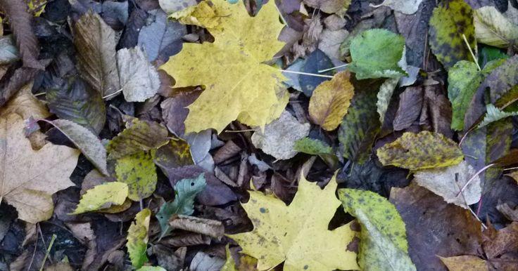 Heute endet also der Goldene Oktober und viele Blätter sind schon von den Bäumen gefallen.       Ich habe Euch einige Ideen zu den Herbstbl...