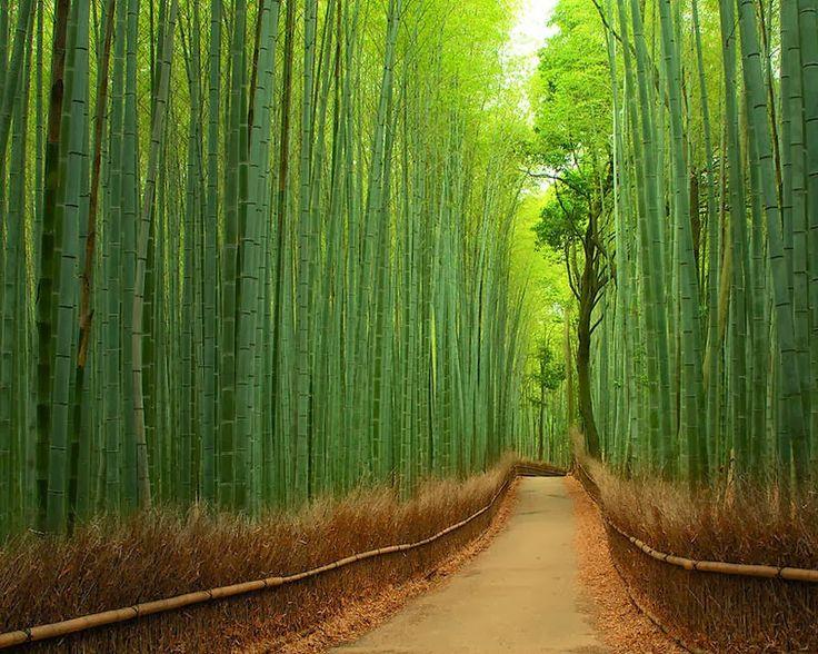 Bosque de Bambu, Kyoto Este hermoso bosque ubicado en kyoto, japón es un bosque de bambú con un área de mas de 16km² un lugar fascinante no solo por su belleza natural si no por los sonidos naturales que produce el viento al chocar con el bambú