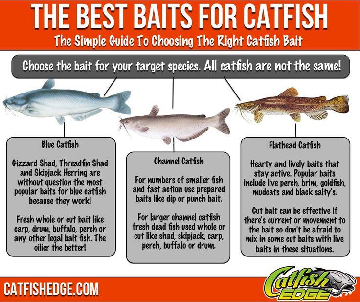 Best 25 bait ideas on pinterest fishing tips fishing for Best fish bait