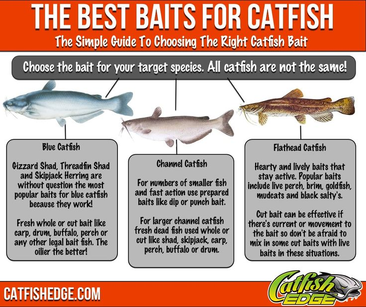 The best catfish bait for each catfish species made simple. An easy to follow guide to the best catfish baits for blues, channels and flatheads