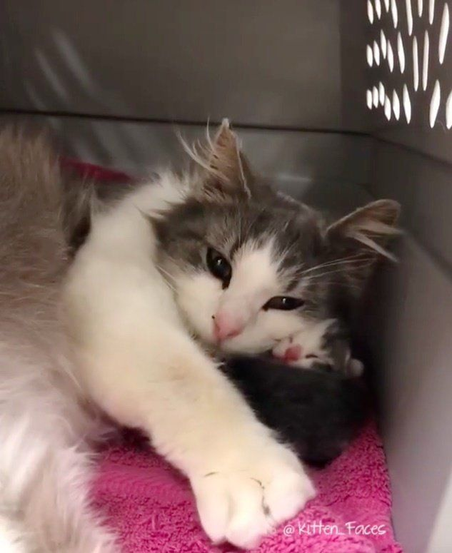 A Beautiful Deaf Cat Was Taken In By A Local Shelter In Indiana After Her Former Owners Turned Her In As She Was Due To Give Birth Barb Kittens Cats