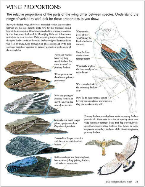 Vögel 2 1 – Yandex.Disk