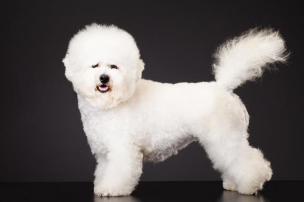 Small Dog Breed Pictures - Slideshow