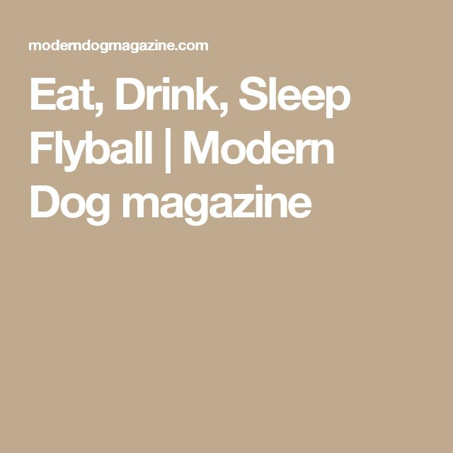 Eat, Drink, Sleep Flyball | Modern Dog magazine