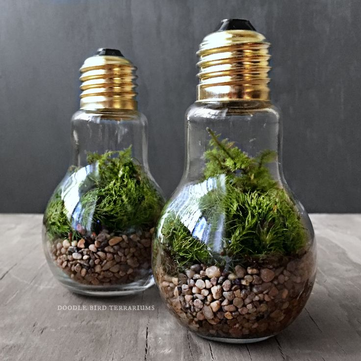 Light Bulb Plant Terraium for Industrial by DoodleBirdie on Etsy