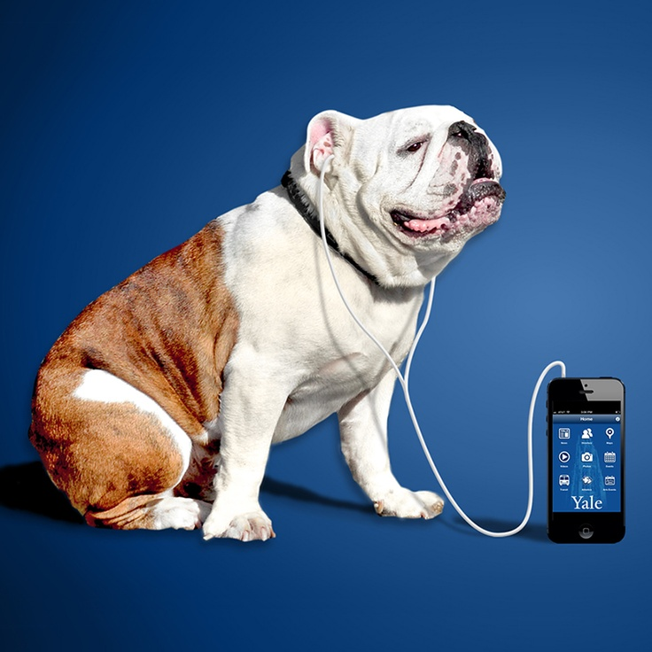 yale bulldog days 13 best bulldogs images on pinterest colleges 6874