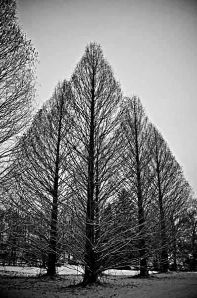winter trees: Beautiful Photos, Winter Trees, Remarkable Trees, Pretty Trees, Nature Trees, Fall Trees, Trees 2Respect