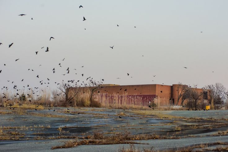 This picture has a poetry to it. The parking lot as a marsh. The birds and nature reclaiming the landscape... The Economics (and Nostalgia) of Dead Malls - NYTimes.com.  The Landover Mall in Maryland was torn down in 2006, leaving empty parking lots and one stand-alone Sears which closed in early 2014.