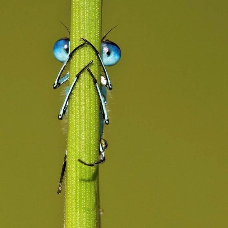 Hide & Seek Dragonfly