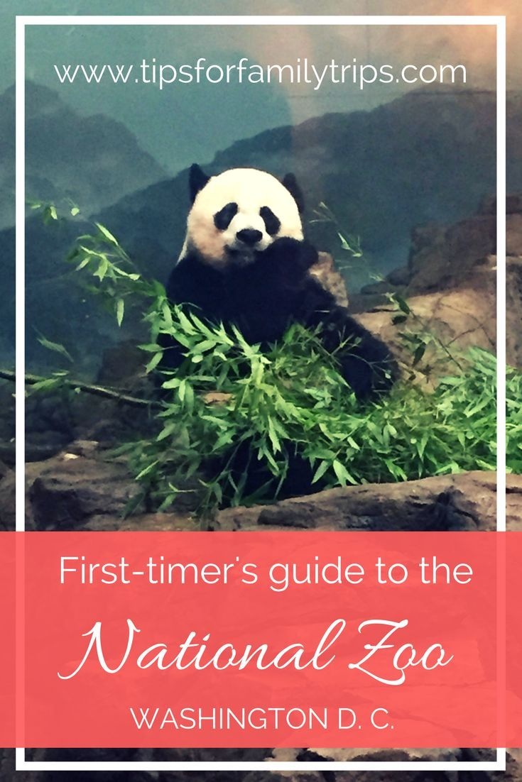 A first-timer's guide to the Smithsonian's National Zoo in Washington D.C. | tipsforfamilytrips.com | family vacation | spring break | summer travel | pandas