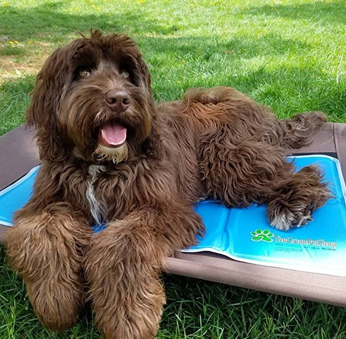 Amazon Com The Green Pet Shop Self Cooling Pet Pad Medium Pet Bed Mats Pet Supplies Pet Pads