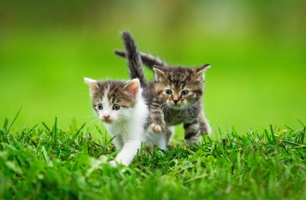 Le gouvernement encadre la vente de chats et de chiens  Pour faire face au trafic d'animaux de compagnie, le gouvernement a publié une ordonnance au Journal officiel pour « assurer un meilleur encadrement du commerce de chiens et de chats ».