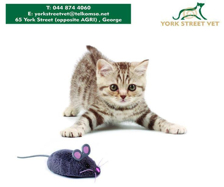 #YorkStreetVet stock a wide range of cat toys that is sure to wake up your kitty's inner lion. #VetStore #MeowMondayhttps://www.facebook.com/Yorkstreetvetshop/photos/pb.646016452164207.-2207520000.1439134251./807858502646667/?type=3