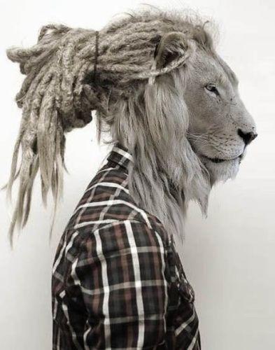 Homme lion et rasta.