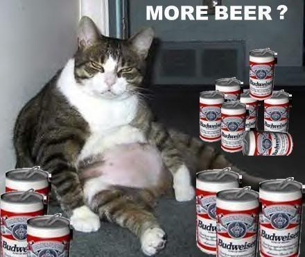 cat beer bottle animal - photo #26