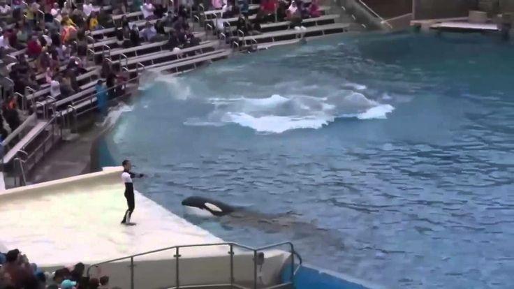"Парк ""Морской мир"" и шоу касаток в Сан-Диего, Калифорния, США."