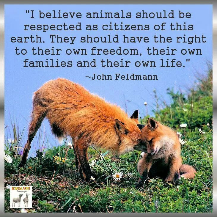 """I believe animals should be respected as citizens of this earth. They should have the right to their own freedom, their own families and their own life"" By John Feldmann"
