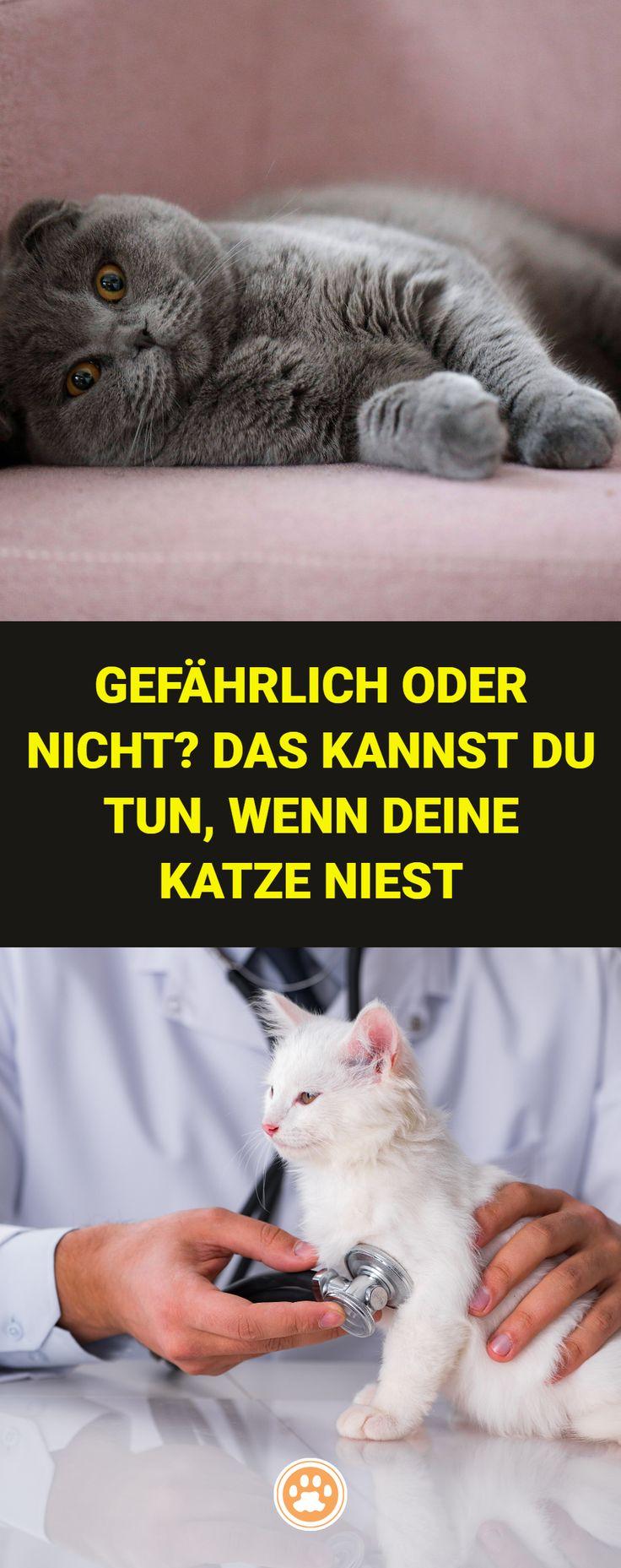 23+ Was Fressen Alte Katzen Gerne   Katzen Bilder Bilder