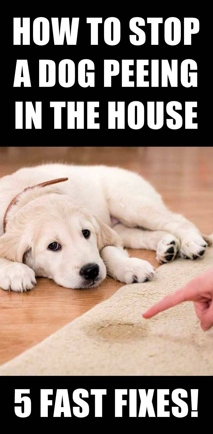 Does Your Dog Occasionally Pee Inside The House You Clean It Up