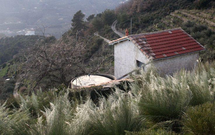 Località Guasco, on the hills next to Soldano, Liguria