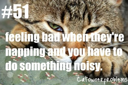 ... about Cat Owner Problems on Pinterest Cats, Cat hair and Cats humor