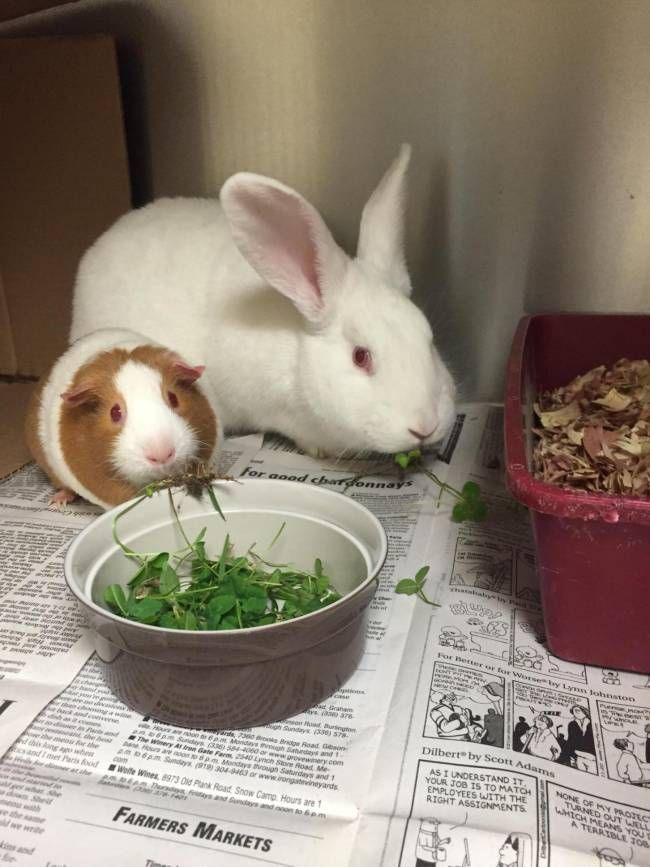 lizardmarsh: Person County, NC: 2 Bonded Impounded LITTLE CRITTERS are looking for forever home TOGETHER!