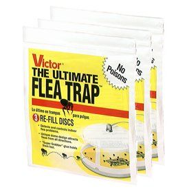 Best Total Treatment For Fleas Cats