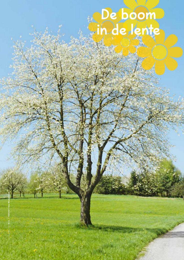 de boom in de lente @keireeen