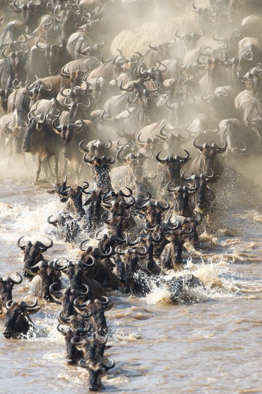 The Great Migration ** Fantastic shot of this annual event. The noise must have been deafening!