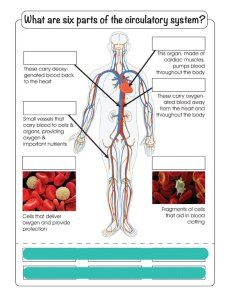 Week-8---Circulatory-System---Cut-&-Paste