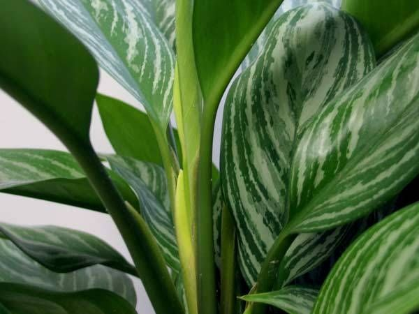 how to identify green house plants