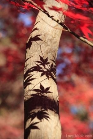 Leaf Shadows photography nature tree autumn leaves fall shadow. Love the use of shadows in photography, life isn't all black and white.
