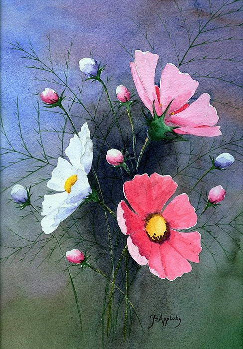 Title  Cosmos   Artist  Jo Appleby  Medium  Painting - Watercolour