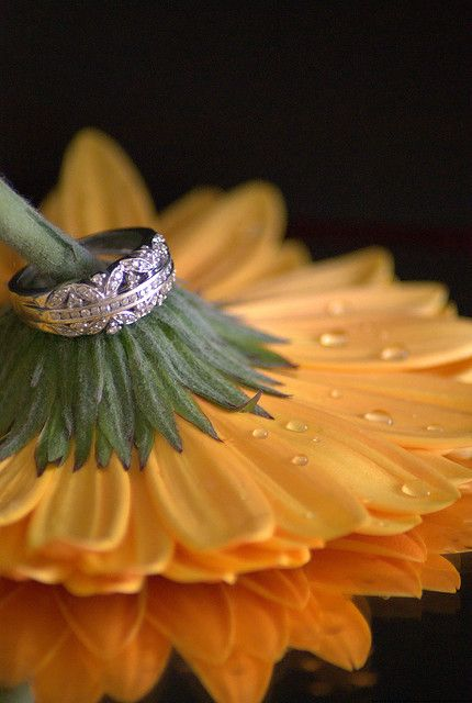Wedding ring shot. I would loooooove this with a sunflower!