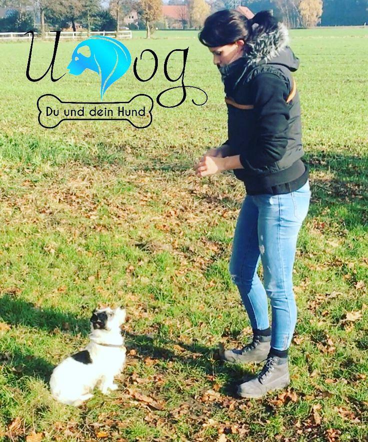 sitz platz fu laufen beifu rolle hundetraining mentales training hundeerziehung welpenerziehung hund welpe - Ideen Fr Kleine Hinterhfe Mit Hunden