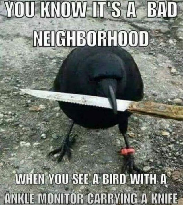You know it's a bad neighborhood when you see a bird with a ankle monitor carrying a knife