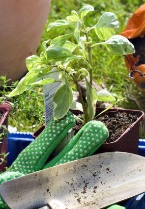 17 meilleures id es propos de pot plante grasse sur for Mettre des barreaux aux fenetres