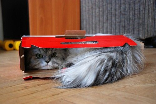 if it fits, i sits: Cat In Boxes, Fitsit Ships, Kitty Cat, Funny Kitty Animal, Beautiful Boys, Boxes Cat, Funny Kittiesanim, Furry Friends, Adorable Animal