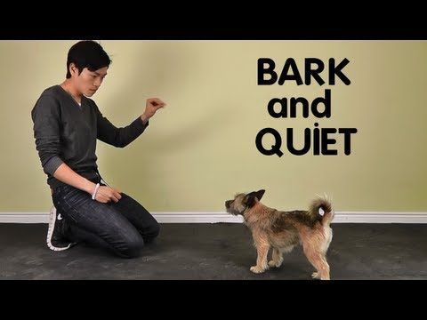 Teach Dog to Stop Barking - Treatpouch.com - YouTube