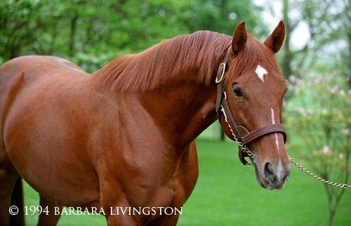 Strike the Gold, 1991 Kentucky Derby winner (In Memoriam - 2011 | Daily Racing Form/Barbara Livingston)